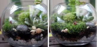 Diy Terrarium Attempt Tutorials